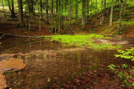 Source of a river in a forest near Windischgarsten (Austria), summer, limestone