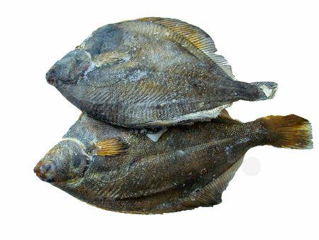 plaice: Fish plaice frozen