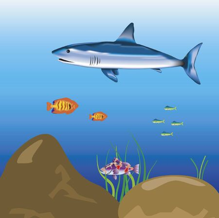 sailling: Shark sailling in ocean