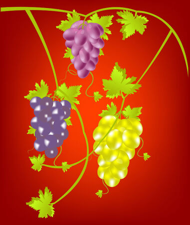 sort: Miscellaneouses of the sort of grape on red background Illustration