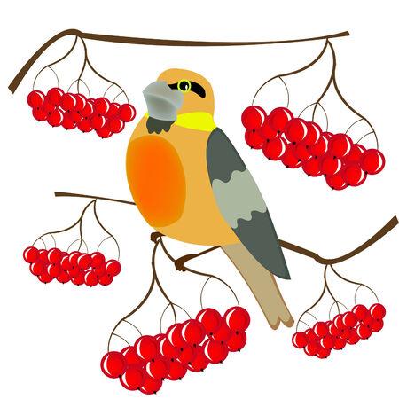 rowanberry: Bird sitting on branch amongst berries of rowanberry