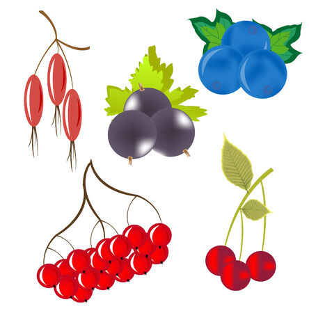 whortleberry: Miscellaneouses of the berry rising on nature on white background