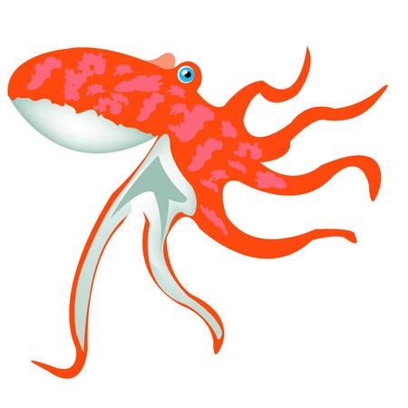 Rose squid on white background