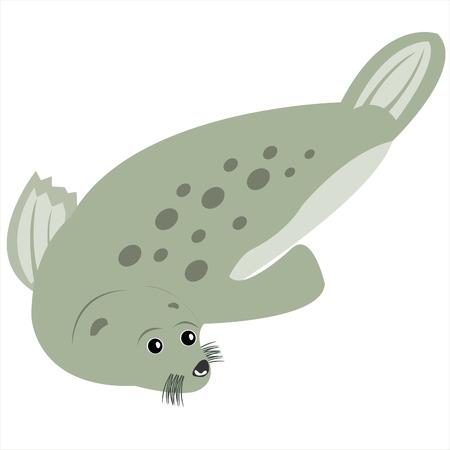 Illustration sea animal seal on white background