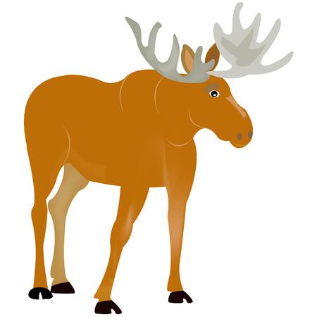 ungulate: Ungulate animal moose on white background