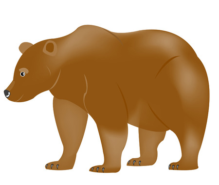 borax: Illustration borax bear on white background
