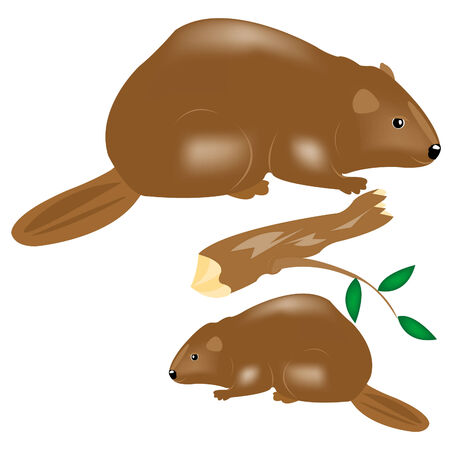 Water animals beavers on white background Stock Vector - 8666274
