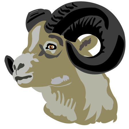 sawhorse: Portrait of the mountain ram on white background Illustration