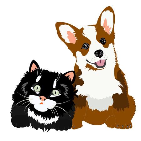 動物猫と白い背景の上犬