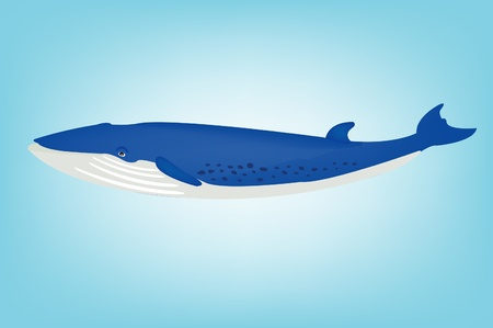 Illustration of the big blue whale