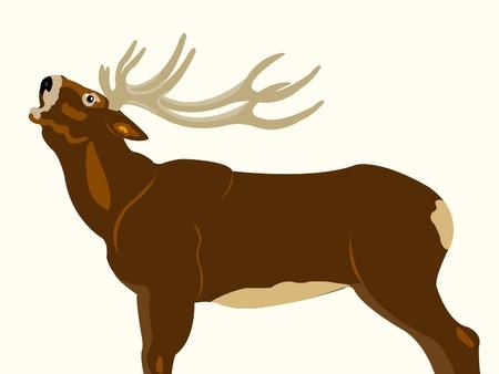 ungulate: Ungulate animal deer on white background