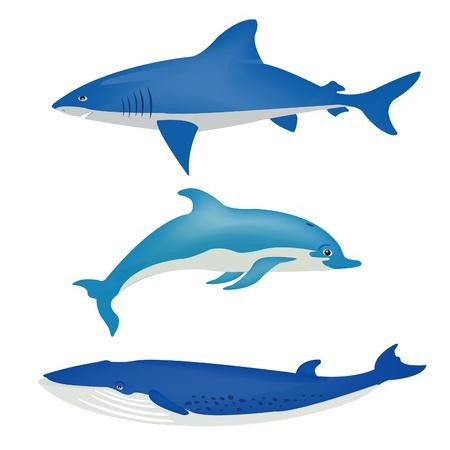 Sea animals on white background