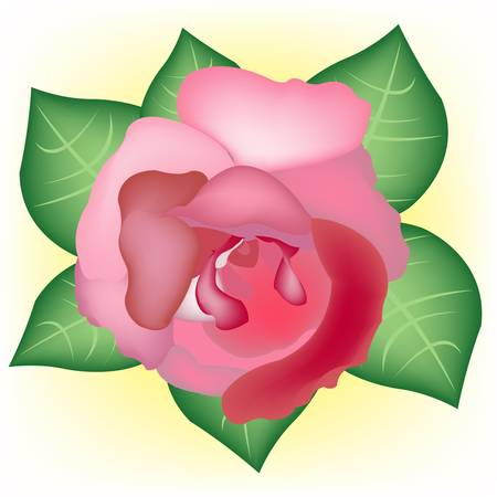 Flower rose red with sheet