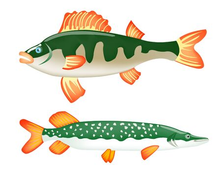 Freshwater ravenous fish perch and pike on white background Stock Vector - 9395744