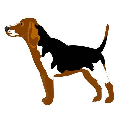 huntsman: Illustration of the dog on white background