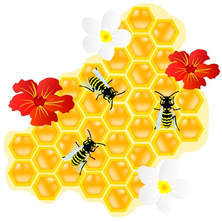 Insect of the bee on honeycomb with honey Illustration