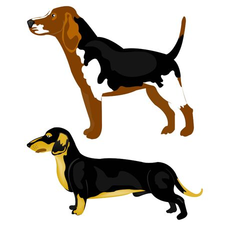 Two dogs of the different sorts on white background Stock Vector - 9395727