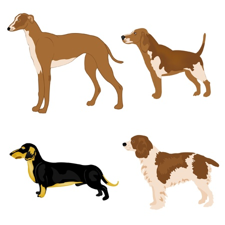 Illustration of the dogs of the different sorts on white background Illustration