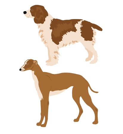 Two dogs of the hunting sort on white background Stock Vector - 9589733