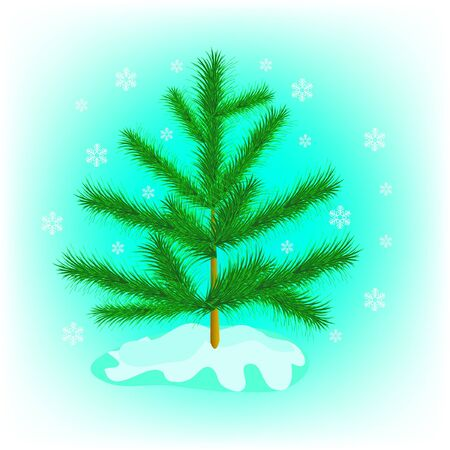 Evergreen tree fir tree in winter Stock Vector - 9830066