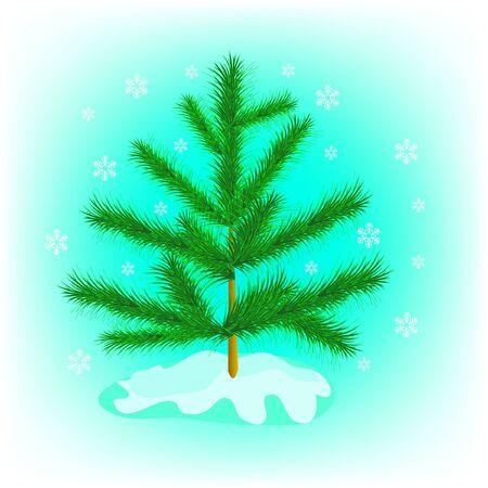 arbre     ? � feuillage persistant: Sapin de conif�re en hiver Illustration