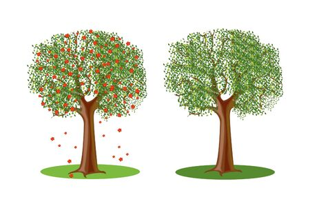 flabby: Flowering springtime tree and year tree