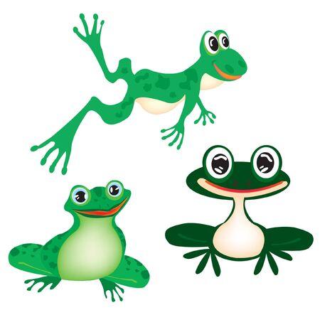 amphibians:  illustration green frog on white background Illustration
