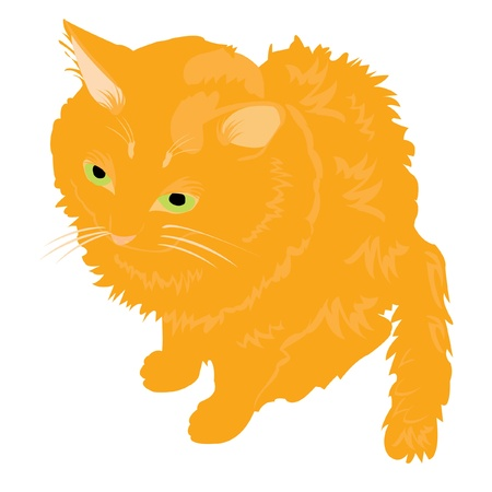 Redhead cat on white background is insulated Stock Vector - 10571097