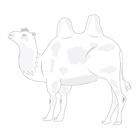 hunch: Illustration animal camel on white background