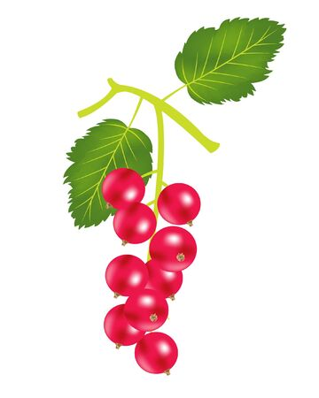sorrel: Illustration of the berries of the wood sorrel on white background