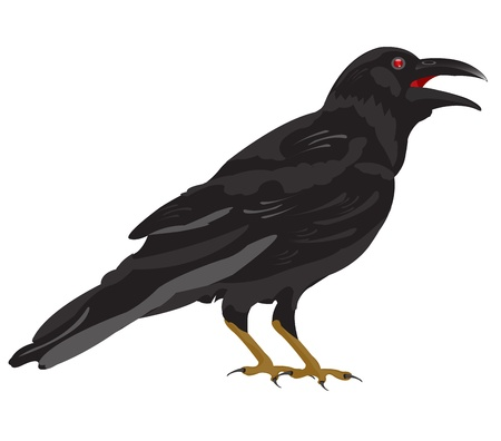 raven: Black raven on white background is insulated