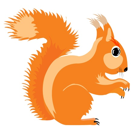Illustration of the squirrel on white background is insulated Ilustrace