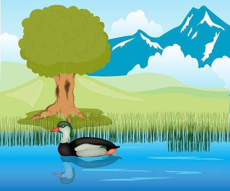 Duck sails in lake amongst bulrush Stock Vector - 16131432