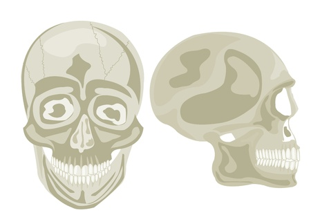 Two human skulls in front and profile Stock Vector - 16240166
