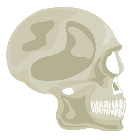 rifts: Skull of the person on white background is insulated