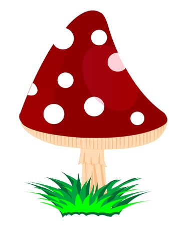 a fly agaric: Illustration of the mushroom fly agaric on white background is insulated Illustration