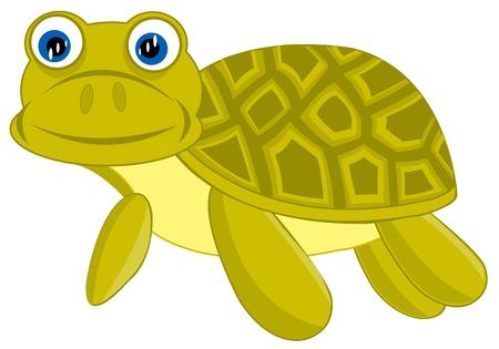 terrapin: Illustrazione della tartaruga d'acqua dolce su sfondo bianco � isolato