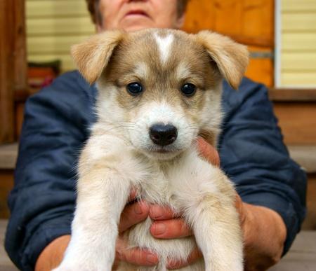 landlady: Small puppy on hand of its landlady