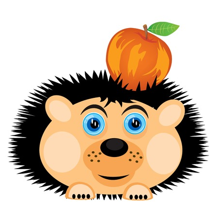 insectivorous: Vector illustration of the hedgehog carrying apple
