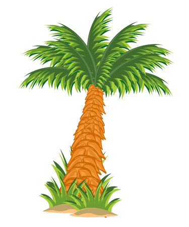 Illustration tree palm on white background insulated