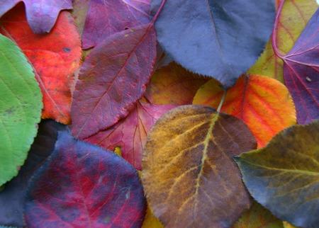 Colorful decorative background from autumn foliage.Autumn background Stock Photo