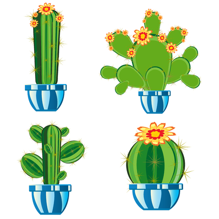 prickly: Much cactuses in pot on white background is insulated
