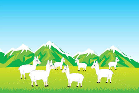bleating: Vector illustration herd sheep on year meadow