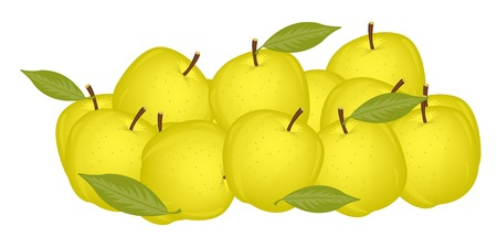 damp: Much yellow ripe apples on white background is insulated