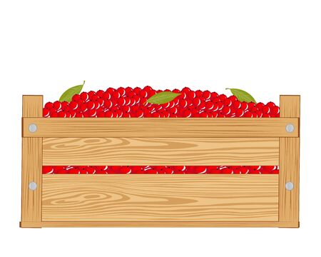 sorrel: Wooden box with red berry on white background