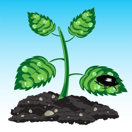 Planta de semillero de la planta con el rocío y de insectos en la hoja Foto de archivo - 38770025