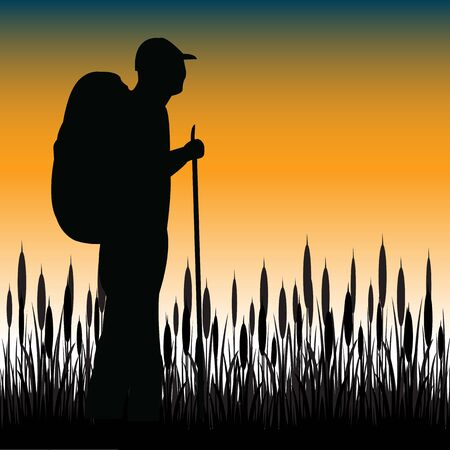 bulrush: The Silhouette of the tourist with rucksack in herb.Vector illustration Illustration