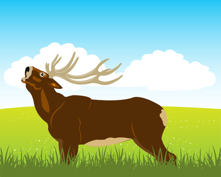 ungulate: The Wild deer with horn on year field.Vector illustration