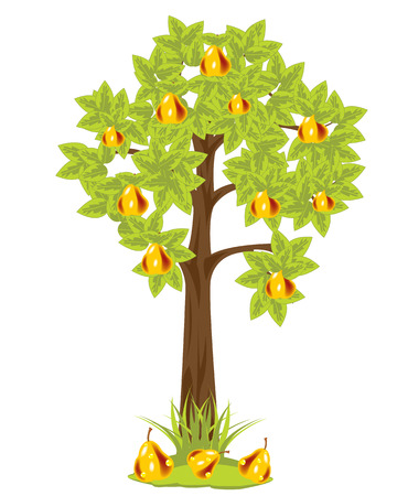 Tree with ripe pear on white background is insulated Illustration