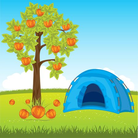 aple: The Tent on year meadow under aple tree.Vector illustration